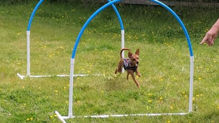 hoopers dog training classes, the haven dog centre, witten park vets