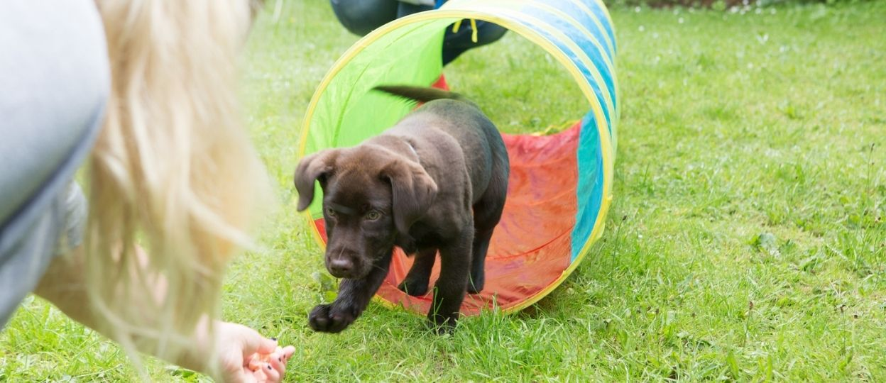 a puppy running through a tube in a 1:1 dog training class at The Haven Dog Centre